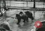 Image of wild animals Washington DC USA, 1921, second 12 stock footage video 65675021544