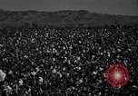 Image of cotton picking United States USA, 1941, second 2 stock footage video 65675021576