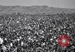 Image of cotton picking United States USA, 1941, second 3 stock footage video 65675021576