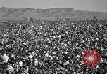 Image of cotton picking United States USA, 1941, second 5 stock footage video 65675021576
