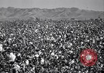 Image of cotton picking United States USA, 1941, second 6 stock footage video 65675021576