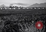 Image of cotton picking United States USA, 1941, second 7 stock footage video 65675021576