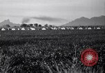 Image of cotton picking United States USA, 1941, second 8 stock footage video 65675021576