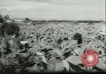 Image of Farming tobacco and fur in Denmark Denmark, 1942, second 4 stock footage video 65675021778