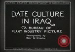 Image of Date Culture in Iraq Mesopotamia Iraq, 1929, second 8 stock footage video 65675022173