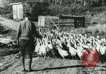 Image of rafter of turkey Sudbury Massachusetts USA, 1931, second 10 stock footage video 65675022473