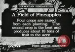 Image of Pineapple harvested Hawaii USA, 1916, second 9 stock footage video 65675022622