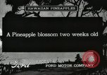 Image of Hawaiian workers Hawaii USA, 1916, second 1 stock footage video 65675022623