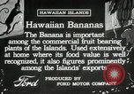 Image of Banana plantation Hawaii USA, 1916, second 9 stock footage video 65675022624