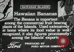 Image of Banana plantation Hawaii USA, 1916, second 12 stock footage video 65675022624