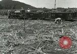 Image of Hawaiian workers Hawaii USA, 1937, second 2 stock footage video 65675022652
