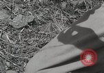 Image of U.S. Army 81st Infantry Division  Palau Islands, 1945, second 1 stock footage video 65675022854