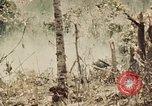 Image of 5th Marine Regiment Peleliu Palau Islands, 1944, second 5 stock footage video 65675022868