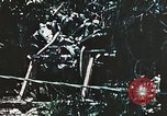 Image of 1st Marine Division Peleliu Palau Islands, 1944, second 6 stock footage video 65675022871