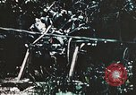 Image of 1st Marine Division Peleliu Palau Islands, 1944, second 10 stock footage video 65675022871