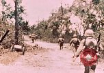 Image of 7th Marine Regiment Peleliu Palau Islands, 1944, second 6 stock footage video 65675022872