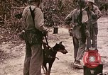 Image of First Division Marines Peleliu Palau Islands, 1944, second 5 stock footage video 65675022907