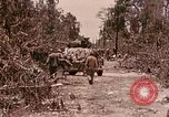Image of First Division Marines Peleliu Palau Islands, 1944, second 12 stock footage video 65675022907