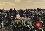 Image of 1st Tank Battalion Peleliu Palau Islands, 1944, second 3 stock footage video 65675022912