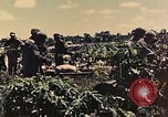 Image of 1st Tank Battalion Peleliu Palau Islands, 1944, second 4 stock footage video 65675022912
