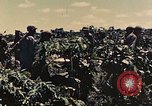 Image of 1st Tank Battalion Peleliu Palau Islands, 1944, second 5 stock footage video 65675022912