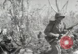 Image of 11th Marine Division Peleliu Palau Islands, 1944, second 4 stock footage video 65675022917