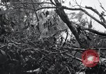 Image of Bloody Nose Ridge Peleliu Palau Islands, 1944, second 9 stock footage video 65675022968
