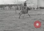 Image of Zonkey California United States USA, 1953, second 11 stock footage video 65675023023