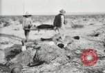 Image of Burying deceased Federals Ojinaga Mexico, 1913, second 7 stock footage video 65675023034
