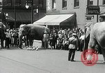 Image of Elephants bowling tourney Cincinnati Ohio USA, 1934, second 7 stock footage video 65675023131