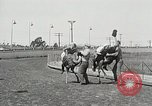 Image of Ostrich race El Cerrito California USA, 1934, second 3 stock footage video 65675023137