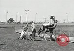 Image of Ostrich race El Cerrito California USA, 1934, second 5 stock footage video 65675023137
