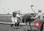 Image of Ostrich race El Cerrito California USA, 1934, second 9 stock footage video 65675023137