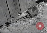 Image of Bodies of political prisoners Gardelegen Germany, 1945, second 4 stock footage video 65675023572