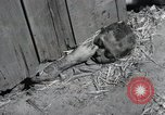 Image of Bodies of political prisoners Gardelegen Germany, 1945, second 6 stock footage video 65675023572