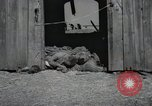 Image of Bodies of political prisoners Gardelegen Germany, 1945, second 9 stock footage video 65675023572