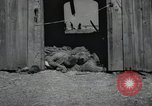Image of Bodies of political prisoners Gardelegen Germany, 1945, second 10 stock footage video 65675023572