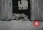 Image of Bodies of political prisoners Gardelegen Germany, 1945, second 11 stock footage video 65675023572