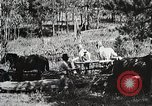 Image of workers load timber United States USA, 1926, second 6 stock footage video 65675023599