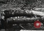 Image of workers load timber United States USA, 1926, second 11 stock footage video 65675023599