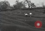 Image of Emergency Conservation Work members United States USA, 1933, second 2 stock footage video 65675023605