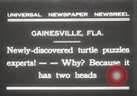 Image of Two headed turtle Gainesville Florida USA, 1931, second 1 stock footage video 65675023611