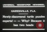 Image of Two headed turtle Gainesville Florida USA, 1931, second 5 stock footage video 65675023611