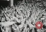 Image of scenes of poultry farm Berlin Germany, 1931, second 10 stock footage video 65675023633