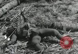 Image of casualty during Battle of Tarawa Gilbert Islands, 1943, second 11 stock footage video 65675023683