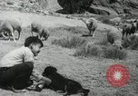 Image of Navajo people's lifestyle United States USA, 1938, second 3 stock footage video 65675023688