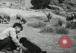 Image of Navajo people's lifestyle United States USA, 1938, second 4 stock footage video 65675023688
