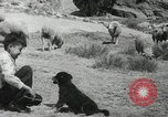 Image of Navajo people's lifestyle United States USA, 1938, second 5 stock footage video 65675023688