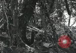 Image of wounded soldiers Guadalcanal Solomon Islands, 1944, second 4 stock footage video 65675023690