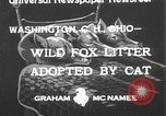 Image of litters of fox Washington Court Houes Ohio USA, 1933, second 1 stock footage video 65675023847